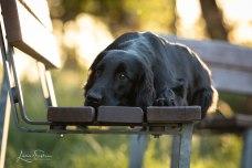 Hunde Luthe